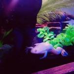 aquariosp_05